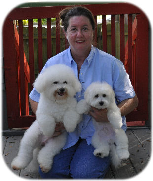 Cambeas Bichon Frise Puppies