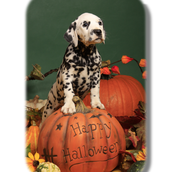"October Is ""Halloween Safety Tips"" Month For Pets 