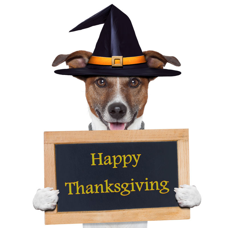 "November Is ""Thanksgiving Safety Tips For Dog Owners"" 